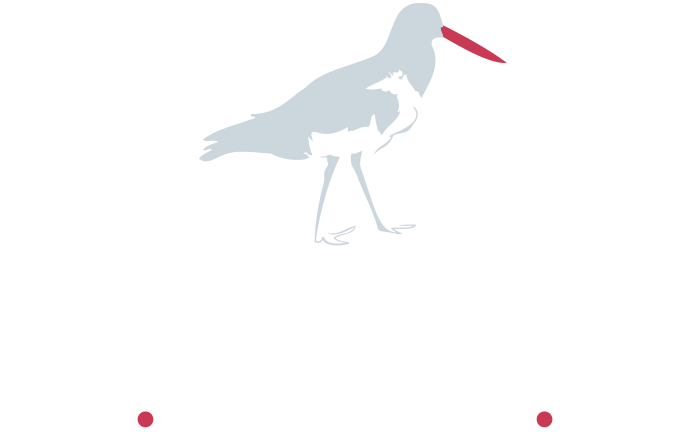 Oyster Catcher Coastal